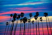 picture of row trees  - California palm trees group sunset with colorful sky - JPG