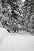 Snowy forest path in winter