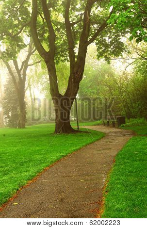 Path in a green foggy park in the spring