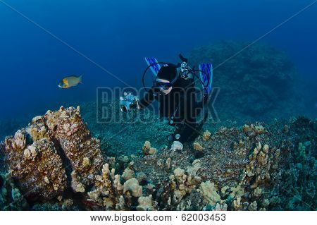 Scuba Diver Taking A Shot Of The Reef