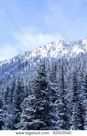 Winter mountains covered with snowy fir trees