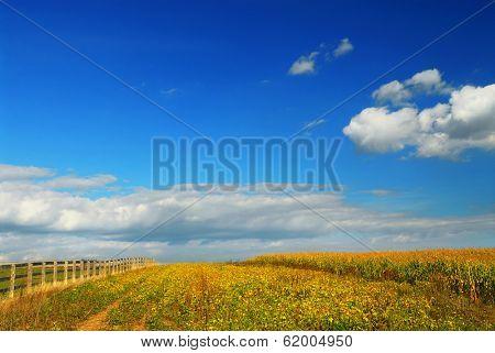 Farm fields on soybeans and corn under blue sky