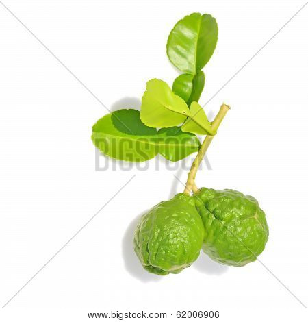 Three Leech Lime