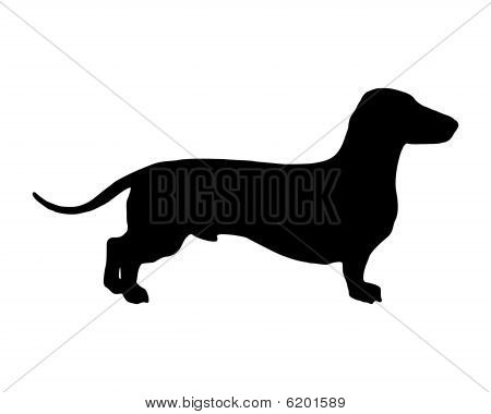 The Black Silhouette Of A Shortlegged Badger Dog