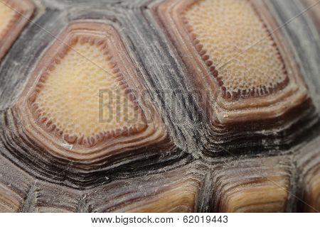 Tortoiseshell
