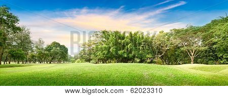 Tree In Golf Course