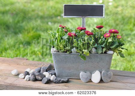 Romantic Message In Garden