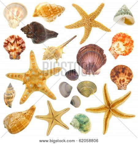 Varied isolated sea shells