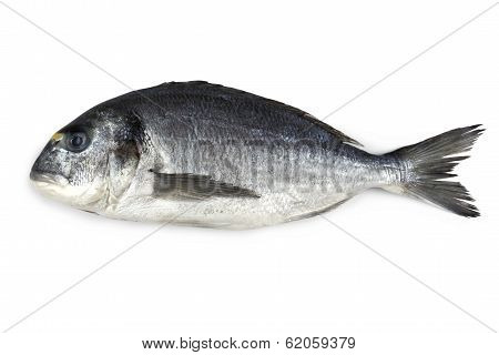 Fresh Bream Fish Isolated