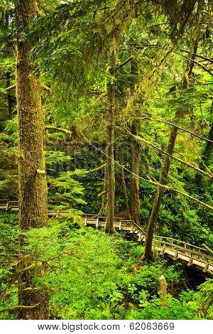 Wooden path through temperate rain forest. Pacific Rim National Park, British Columbia Canada