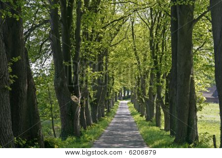 Alley with trees, Lower Saxony, Germany