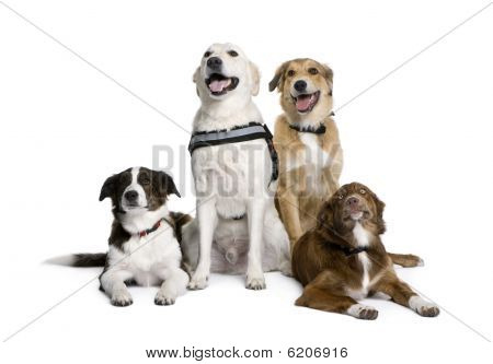 Group Of Bastard Dogs Sitting In Front Of White Background