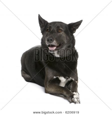 Mixed Breed Dog Between A Husky And A Shepherd, 5 Years Old, Sitting In Front Of White Background