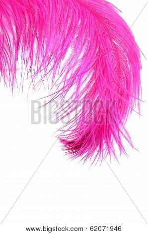 Pink Beautiful Feather Isolated On White