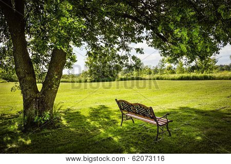 Bench under lush shady tree in summer park