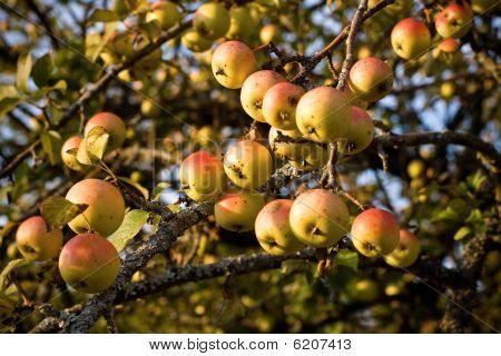 Fruitfull Year