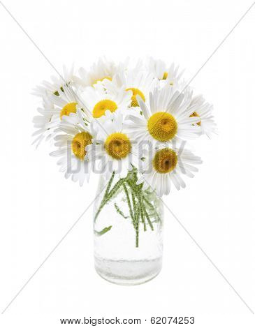 Wildflower bouquet of oxeye daisies isolated on white background