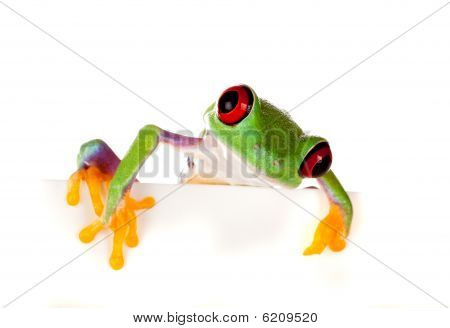 Red Eyed Frog Peeping