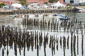 Sailboats Behind Pilings In Harbor