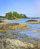 stock photo of pacific rim  - Rocky ocean shore in Pacific Rim National park - JPG
