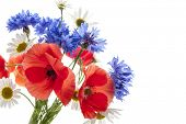 Bouquet of wildflowers - poppies, daisies, cornflowers - on white background, studio shot with copy