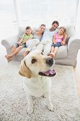 stock photo of labradors  - Happy family sitting on couch with their pet yellow labrador on the rug at home in the living room - JPG