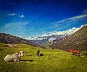 foto of himachal  - Vintage retro hipster style travel image of serene peaceful landscape background  - JPG