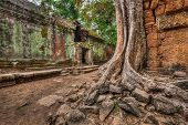 High dynamic range (hdr) image of  ancient ruins with trees, Ta Prohm temple, Angkor, Cambodia