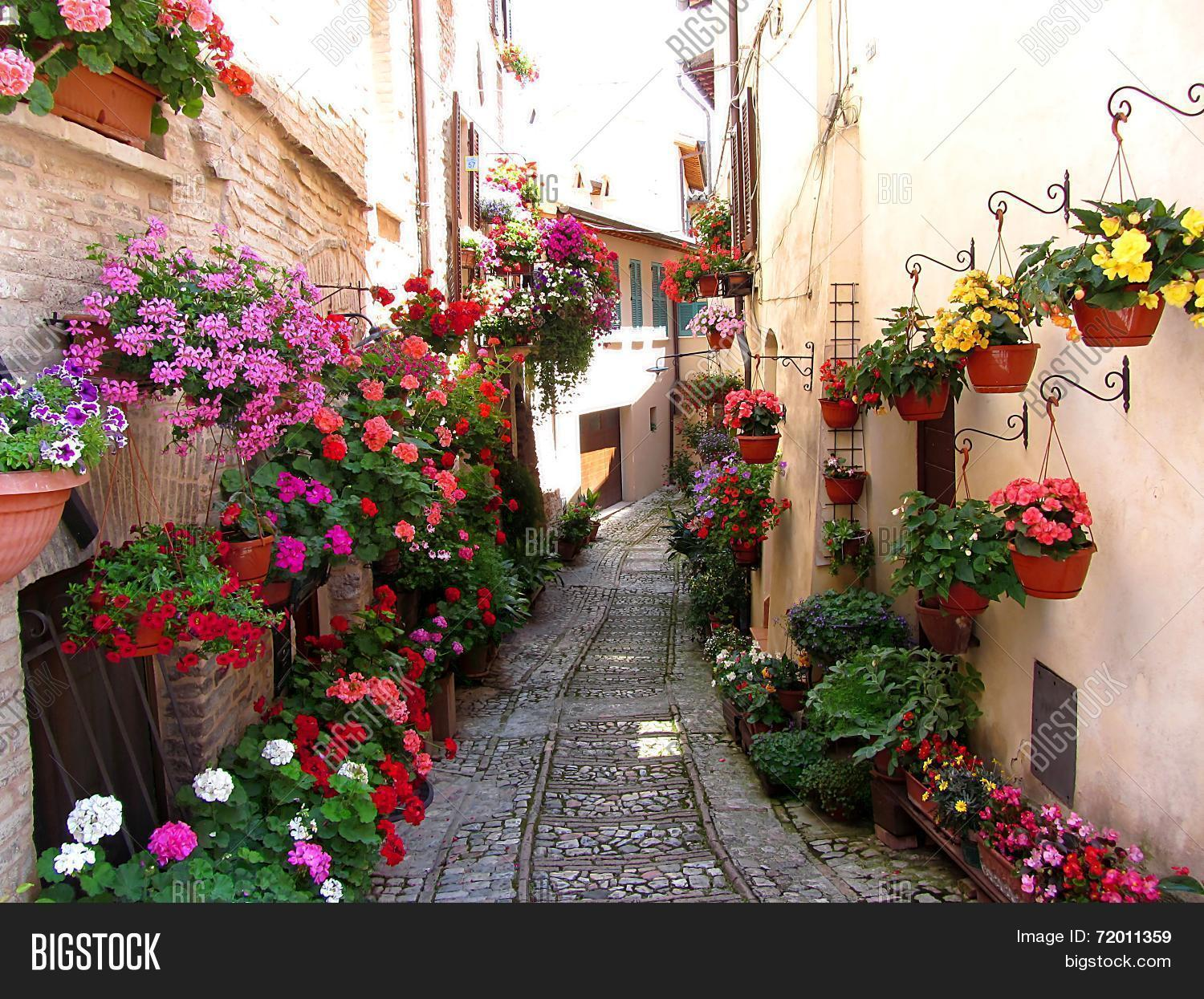 Windows balcony flower alleys image photo bigstock for Spell balcony