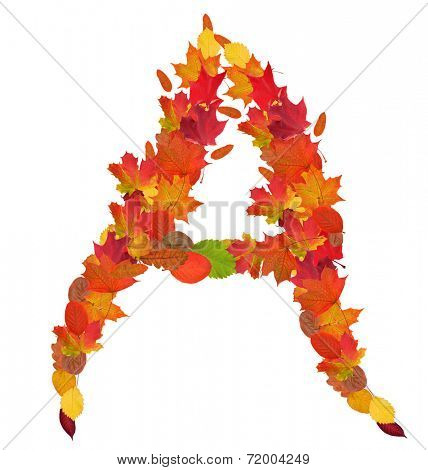 letter from bright autumn leaves isolated on white background