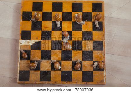 Snails with chess