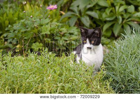 Kitten Sitting In Rockery