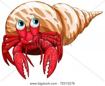 Illustration of a single hermit crab