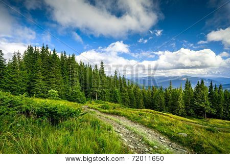 summer landscape. mountain path with forest on the blue sky background. Panorama