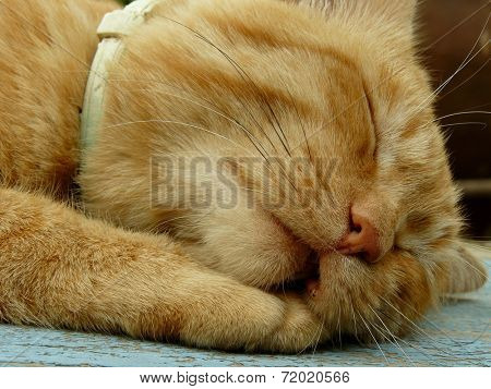 snoring cat muzzle with saggy cheek