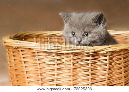 Grey Kitten In The Basket