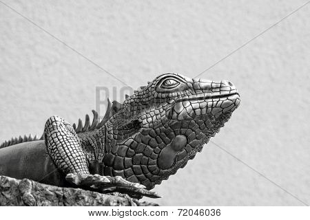 Metal Lizard Of Gray Color