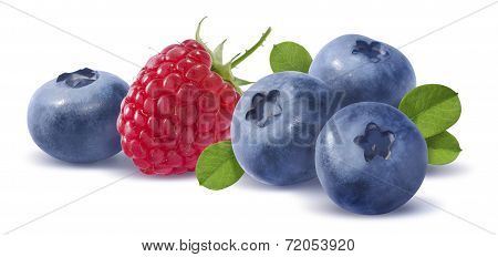 Forest Berries Horizontal Compositon Isolated On White Background