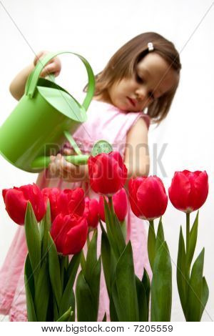 Litlle Girl Droping A Bouqet Of Red Tulip