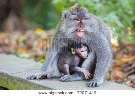 Protective Female Monkey