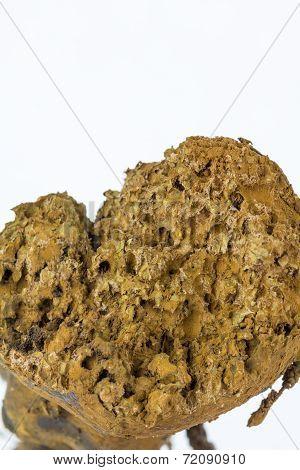 Close-up Of Spores In Mature Fungus