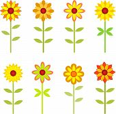 picture of sunflower  - sunflowers - JPG