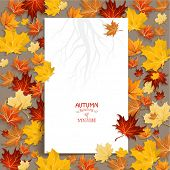picture of canada maple leaf  - White blank with autumn maple leaves - JPG