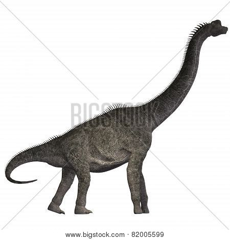 Brachiosaurus On White