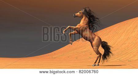 Desert Wild Horse