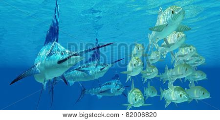 Marlin Attack Ayu Fish