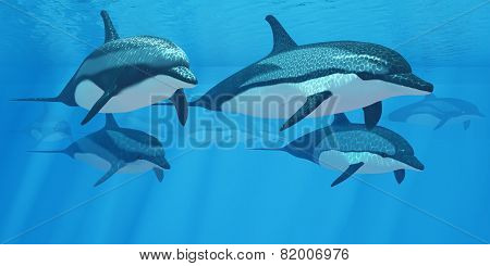Striped Dolphin Pod