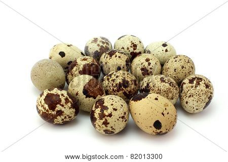 Several Brown Spotted Quail Eggs