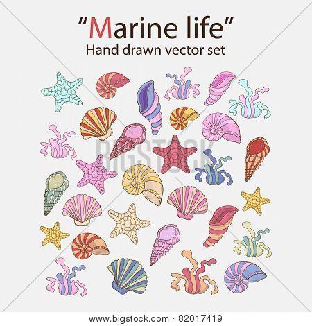 Vector marine seaweed,shells