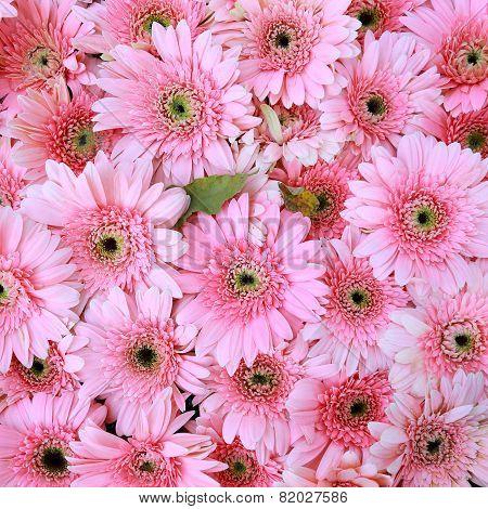 Beautiful Pink Flowers, Gerbera Flowers